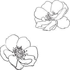 Free Image on Pixabay - Rose, Wild, Flower, Flowers