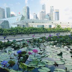 Singapore Singapore, River, Building, Outdoor, Outdoors, Buildings, Outdoor Games, The Great Outdoors, Construction