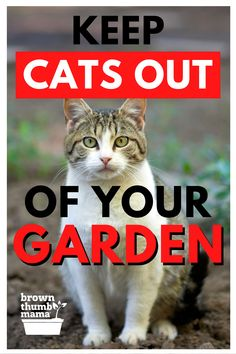 Cats using your garden as a litterbox? Here are 8 natural ways to keep cats out of your garden--plus 4 dangerous methods you should never use. Growing Tomatoes, Growing Herbs, Growing Vegetables, Container Herb Garden, Growing Gardens, Survival Life, Garden Pests, Backyard Projects, Organic Vegetables