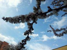 Blue sky of Sardinia .and apricot flowers. Sardinia, Utility Pole, Sky, Garden, Flowers, Blue, Heaven, Garten, Heavens