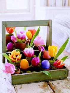 Easter Msn Display Pictures 27