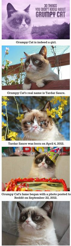 30 things you didn't know about grumpy cat… Okay, so I knew some of these... Adorbs.