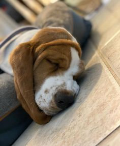 The Dangers of Commercial Pet Food Sometimes i fall out of my bed. Canned Dog Food, Pet Food, Organic Recipes, Raw Food Recipes, Vitamin Rich Foods, Prey Animals, Sleepy Dogs, Dog Diet, Raw Food Diet