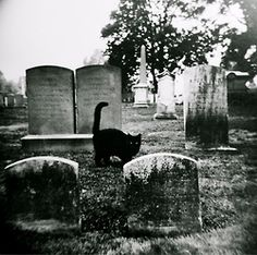 Yet another creature in a graveyard that is probably a black cat.