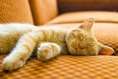 Catatan si Kucing: Penanganan Untuk Kucing Diare