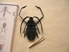 Acrocinus Longimanus by gj0kyz, designed by Robert Lang: Folded from 40cm tissue foil  #Origami_Insects #Robert_Lang #Acrocinus_Longimanus