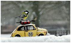 Schifoan http://fc-foto.de/30308452