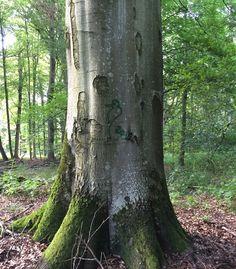 Markierter Spechtbaum #specht #totholz #naturschutz #artenschutz #Buche