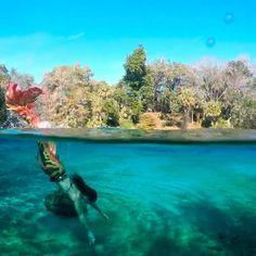 @thepandoramermaid splashing around one of the natural springs Mermaid Videos, Mermaid Gifs, Mermaid Movies, Mermaid Names, Mermaid Pictures, Real Mermaids, Mermaids And Mermen, Underwater Photography, Travel Photography