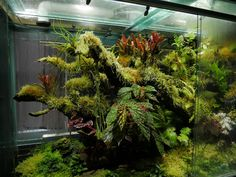 Reptile Habitat, Reptile Cage, Reptile Enclosure, Tropical Garden Design, Tropical Plants, Indoor Garden, Indoor Plants, Orchid House, Aquarium Landscape