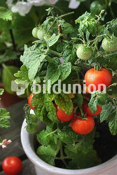 Medien-Nr. bu10380675, © Bildunion / Liz Collet - Bildunion