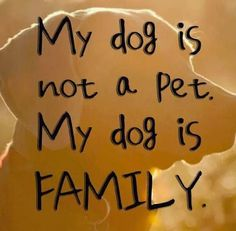 My dog is not a pet. My dog is family.