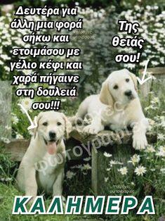 Good Morning, Labrador Retriever, Funny, Animals, Kai, Quotes, Buen Dia, Labrador Retrievers, Quotations
