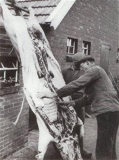 De slachter druk bezig. In mijn jaren, waren het de slachters: De Sijme en Speek, afkomstig van Oud-Gastel en Oudenbosch, die het varken bij Oma en Opa van Eekelen kwam slachten. Dienij de Lang-de Bruijn, haar herinnering.