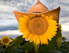 Sunflower with hat via Carol's Country Sunshine on Facebook