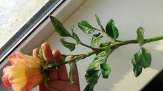 Natali Flowers Rose Clay, Flowers, Plants, Flora, Royal Icing Flowers, Floral, Plant, Florals, Flower
