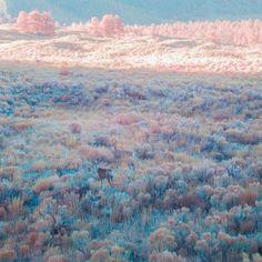Imagen de pink, nature, and deer