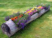 Learn how to make a log planter for your backyard decor. Step by step tutorial shows how to make DIY log planters from fallen trees in the yard. Container Gardening, Gardening Tips, Organic Gardening, Flower Gardening, Planting Flowers, Flowers Garden, Spring Flowers, Flowering Plants, Growing Flowers