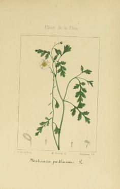 2 - Album de la flora médico-farmacéutica é industrial, indígena y exótica, - Biodiversity Heritage Library