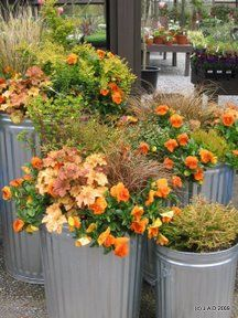beautiful container plantings - in my favorite containers - galvanized garbage cans