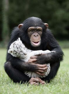 When Different Animal Species Bond With Each Other