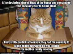 funny kittys | Funny Cats - Cats Photo (13628576) - Fanpop fanclubs