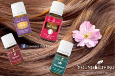 Try using essential oils to scent your hair! Some of the most popular choices include Lavender, Vetiver, Rosemary, Chamomile (German or Roman), and Ylang Ylang essential oil.  ➡️ www.facebook.com/EssentialOilsMUC   Get yours today Online bestellen  Ordena aquí  www.bit.ly/YL_EssentialOilsMunich   #YoungLiving #healthy #yleo #myyl #essentialoilsmunich #wellness #garyyoung #EssentialOils #essentialoilspa #spa #aromaterapia #aromatherapy #aceiteesencial #seedtoseal #æteriskeolier #essentialoils