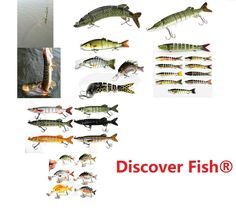 Amazon.com : Discover Fish® New Multi Jointed Jointed Fishing Lures Life-like Hard Lures Bass Bait Swimbait Minnow Crank Shad Herring Bass Pike Muskie(1pcs) : Sports & Outdoors