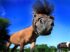 Сколько бы я не работала, я всегда выгляжу свеженькой, бодренькой,  отдохнувшей... Лошадью!