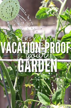 Great gardening tip! Super simple DIY hacks to set up before you leave for vacation to vacation-proof your garden and ensure your plants don't die while you're gone! They take just a few minutes, and will make a world of a difference for your garden! :: DontWastetheCrumbs.com