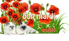 Bon Weekend, Bon Mardi, Congratulations, Teddy Bear, Minute, Cabinet, Bonjour, Clothes Stand, Closet