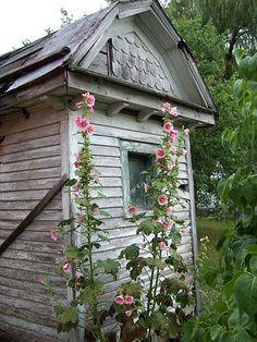 pretty pink hollyhocks, old shed. Love the old shed! Cottage Garden Design, Cottage Garden Plants, Cottage Gardens, Outdoor Sheds, Outdoor Gardens, Le Hangar, Potting Sheds, Tool Sheds, Hollyhock