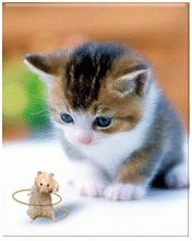 Cute Kitty and Dancing Mouse Gif Just click on gif see motion