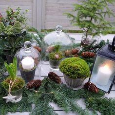 """Jenny ~ (@utflyktermedmera) på Instagram: """"~ G r ö n t ~ Pyntar lite...😄 🌲✨💚✨🌲 #söndag #november #pysslar #pyntar #vinter #vinterpynt…"""" Christmas Inspiration, Terrarium, November, Table Decorations, Instagram Posts, Home Decor, Terrariums, November Born, Decoration Home"""