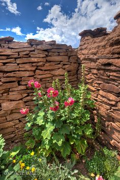 Sandstone wall and flowers, New Mexico