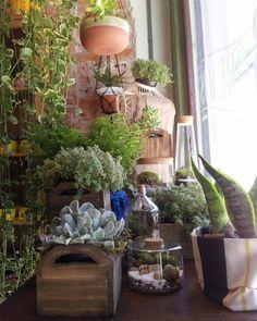 Vitrine de hoje.  Eu tô apaixonada por ela! E vcs? Vem conhecer a lojinha! #succulents #succulove #plants #curitibacool @curitibacool