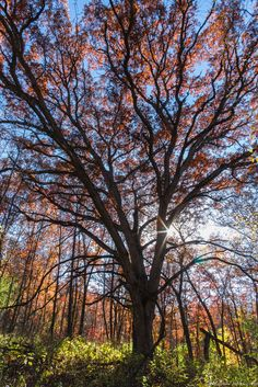 Autumn's Canopy by Matthew John George on Capture Wisconsin // Late afternoon last year along the Southern unit of the Ice Age Trail.