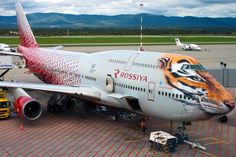 """Tiger head on Rossiya's B747  -  October 13, 2016.  Russian carrier Rossiya Airlines has """"dressed"""" its Boeing 747 in a tiger head livery. It resembles similar livery owned by the now defunct Transaero."""