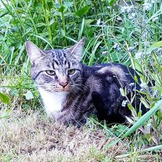 Can you read on my face - dog's barking over the fence ) #cats #catstagram #catsinstagram #catsagram #tabbycats #catslovers #catsworld #whenyouhaveacat #tabbycat #cat #catsface #mycat #catinthegarden #gatto #bengalcross #mainecooncross #bengalmaincoon #Meow #meowpagecats #allaboutcats #tabbycatsofinstagram #кот