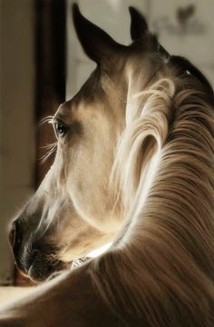 photos of horses heads - Google Search