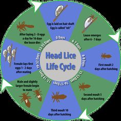 The life cycle of lice Lice Removal, Health Department, Fire Starters, Life Cycles, Stress Free, Natural Oils, Lunges, How To Remove