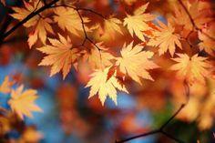 le secret pour conserver les feuilles d'automne : la glycérine (cf recette !)