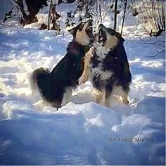 Best Friends Forever - till the bitter end perhaps the end is closer then we think  #awesomepix#exklusive_shot#ig_masterpiece#theworldshotz#finnishlapphund#bestwoof#bestdogever#finnishlapplove#cutedogsofinstagram#cutedogfeatures#poshpamperedpets#dog_features#featuredog#lovemydog#dogsofinstagram#dogs#weeklyfluff#weeklyfluffballs#weeklyfluffy#ig_cameras_united#ig_captures#weareigfamily#instadog#dogfessional#lacyandpaws#worldtopdogs#happydog#dogs#instadog by aikoandmumsy