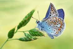 The broken wing by ~Viand Photography / Macro / Nature©2010-2013 ~Viand