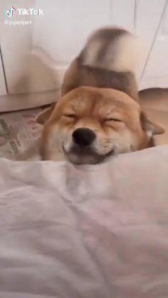 Cute Animal Photos, Cute Animal Videos, Funny Cute Cats, Cute Funny Animals, Cute Baby Dogs, Cute Puppies, Fluffy Animals, Cute Little Animals, Happy Animals