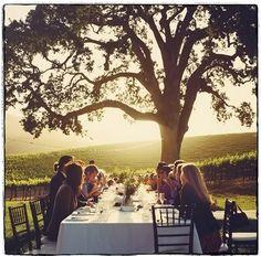 vineyard celebrations