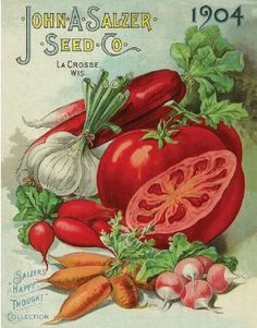 Vegetables, 1904 | Vintage Seed Packet ~ Catalog