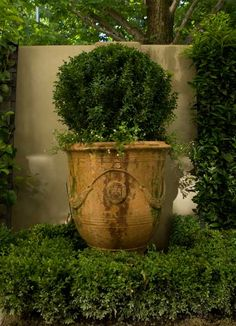 love my anduze pots Boxwood Garden, Garden Urns, Container Plants, Container Gardening, Urn Planters, Pot Plante, Garden Inspiration, Garden Ideas, Terracota