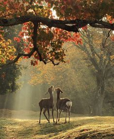Two deer meeting in a beautiful Connecticut forest Fast Crazy Nature Deals. Beautiful Creatures, Animals Beautiful, Animal Photography, Nature Photography, Travel Photography, Animals And Pets, Cute Animals, Nature Aesthetic, Makeup Aesthetic