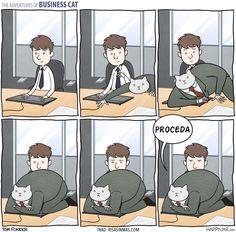 Gato empresario: proceda